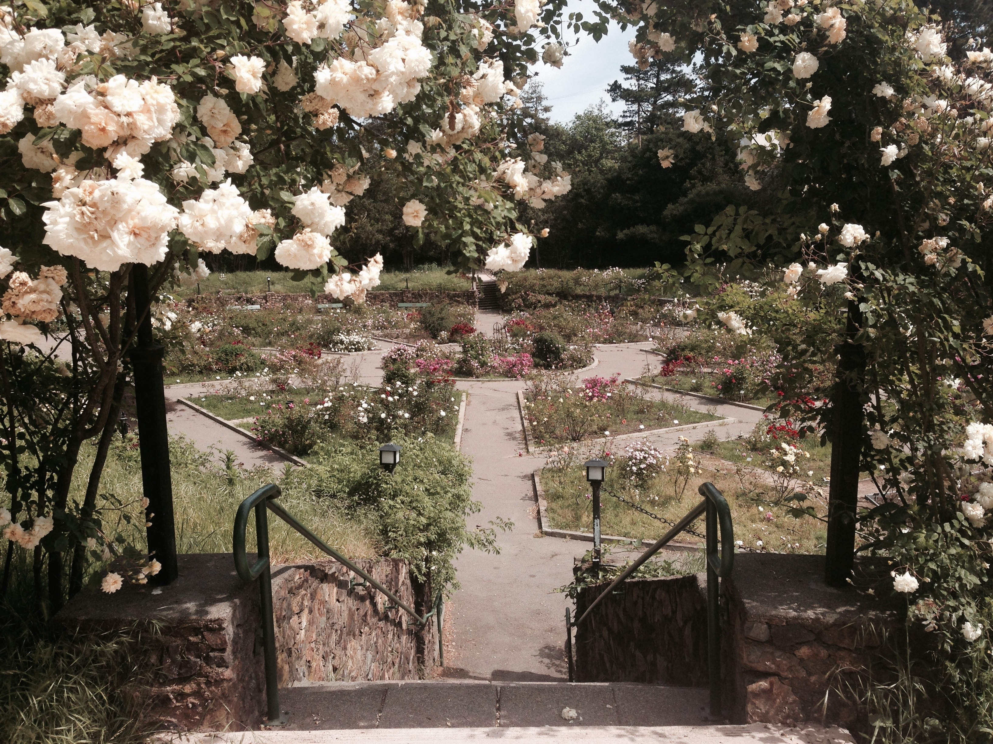 You Are Here: Rose Garden | Nowhere | Travel Stories