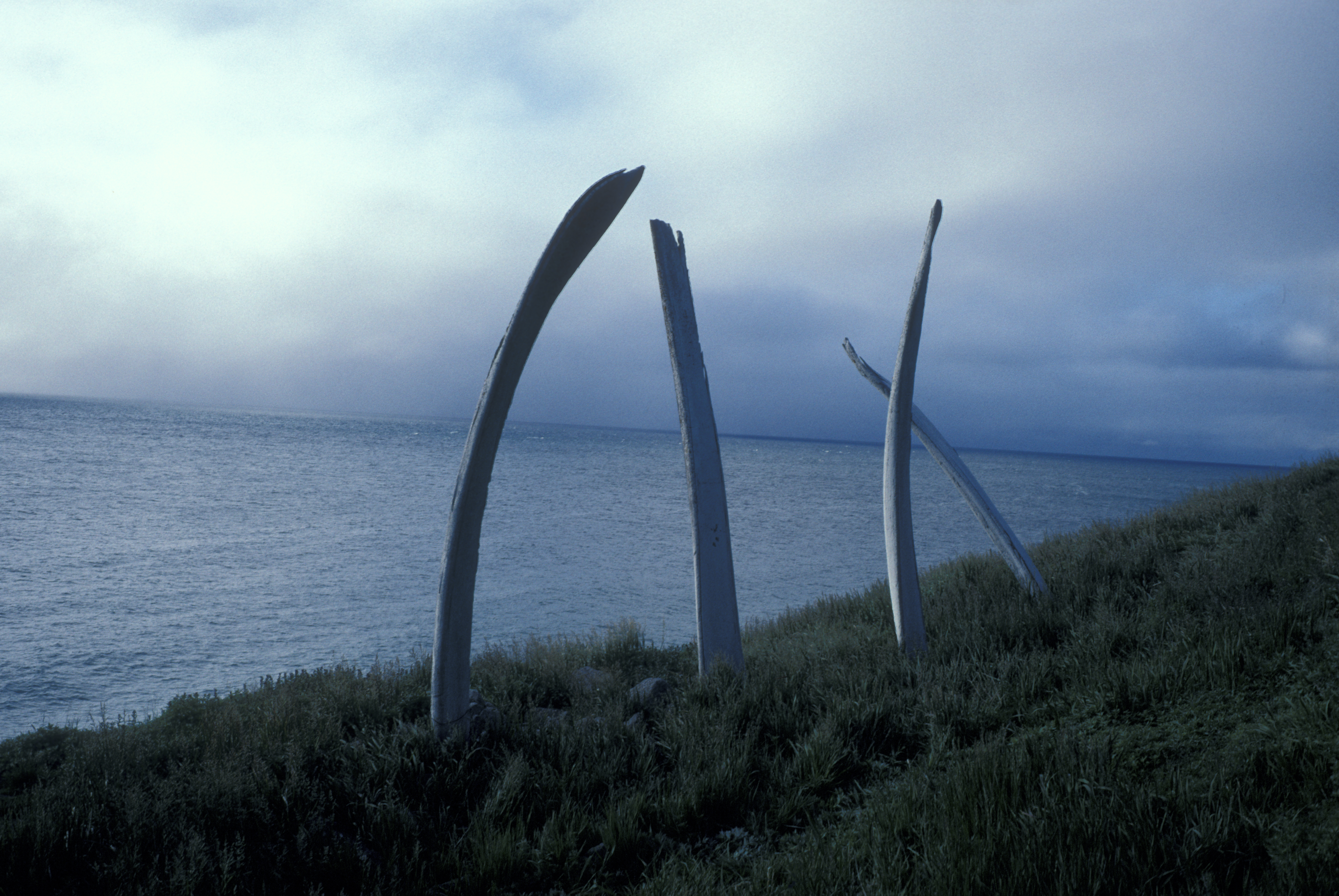 Siberia_Peck_26_39_whale_bones_on