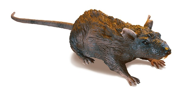 rat edited
