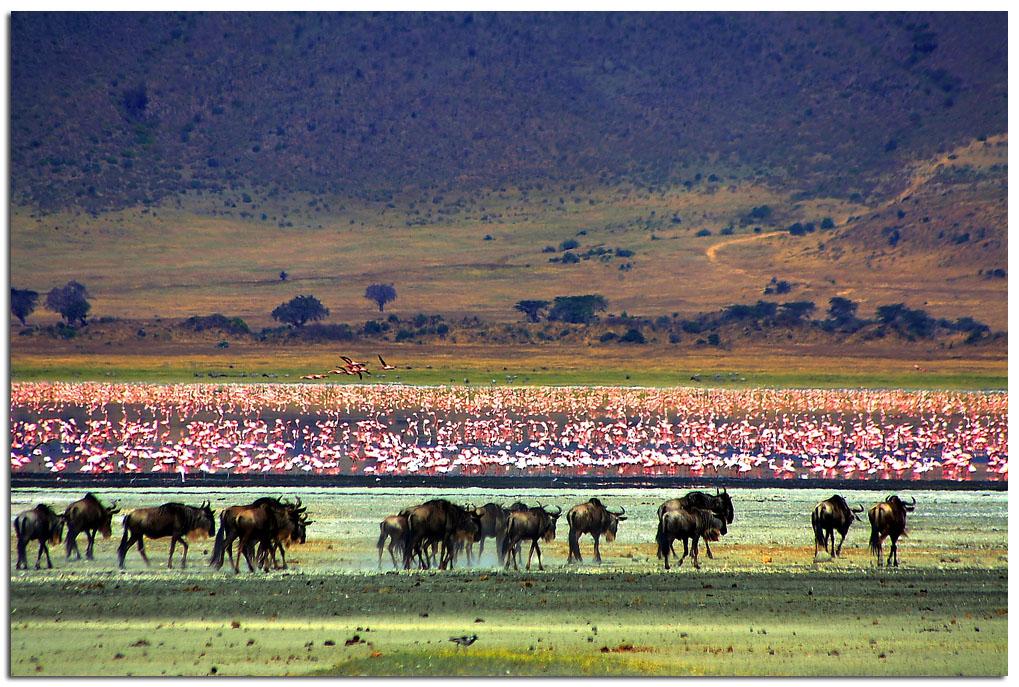 Ngorongoro Crater Exploring The Garden Of Eden By Marthe Weyandt